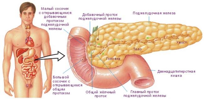 bolezn-pankreatit-chto-eto-takoe1