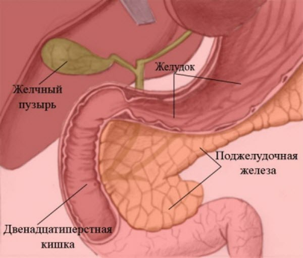 Лечение желудка прополисом  прополис