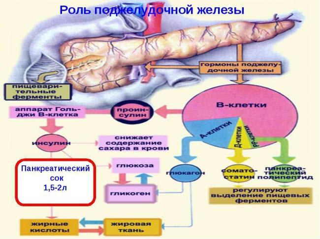 nedostatok-fermentov-podzheludochnoj-zhelezy4