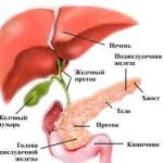 Підшлункова залоза: де знаходиться і як болить