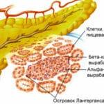 Анатомія про підшлункової залози: будова, функції в організмі: гістологія