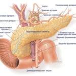 Що являє собою екзокринної частини підшлункової залози