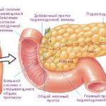 Кровопостачання підшлункової залози