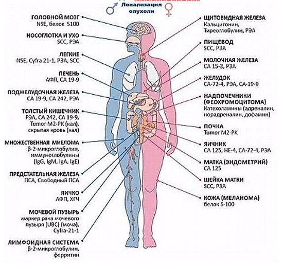 Поджелудочная железа симптомы диета